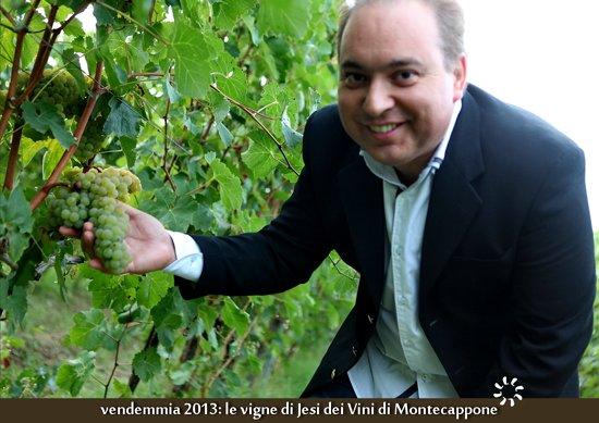 Vendemmia_2013_Verdicchio_dei_Vini_di_Montecappone_di_Gianluca_Mirizzi
